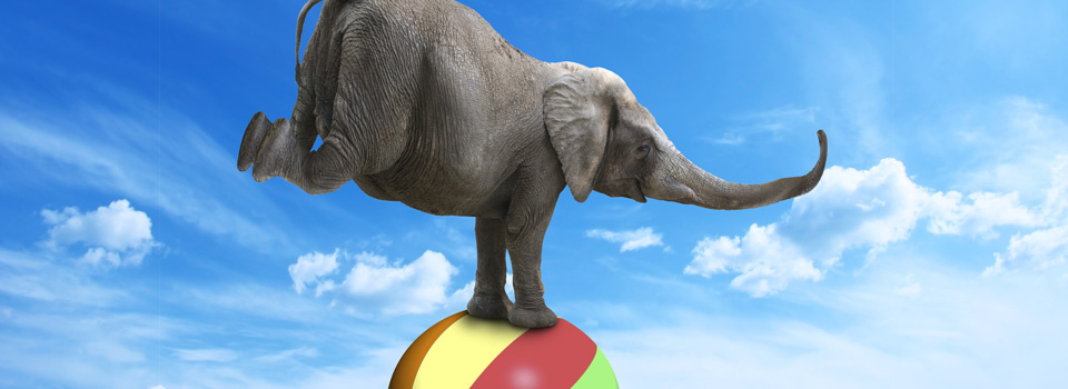 Elephant Balancing on Coloured ball