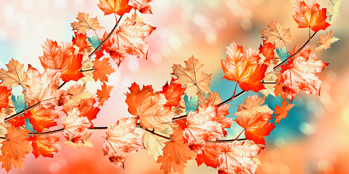 Autumns leaves - red and pink