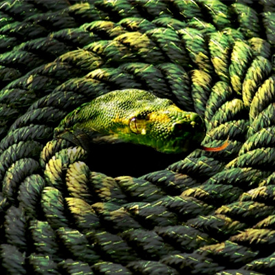 snake and rope