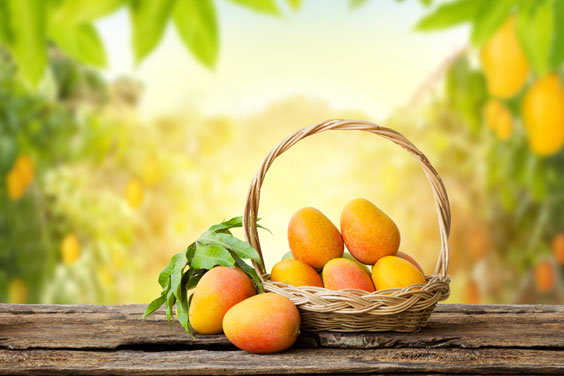 Mangos with mango grove background
