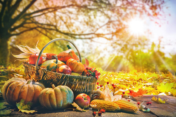 Autumn foods
