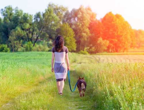 Take a Morning Walk to Lose Weight, Feel Great