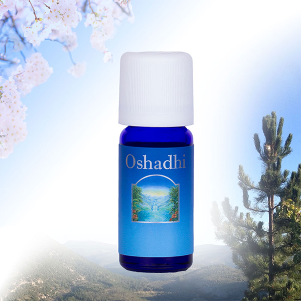 Juniper Organic Essential Oil (Oshadhi) 10ml