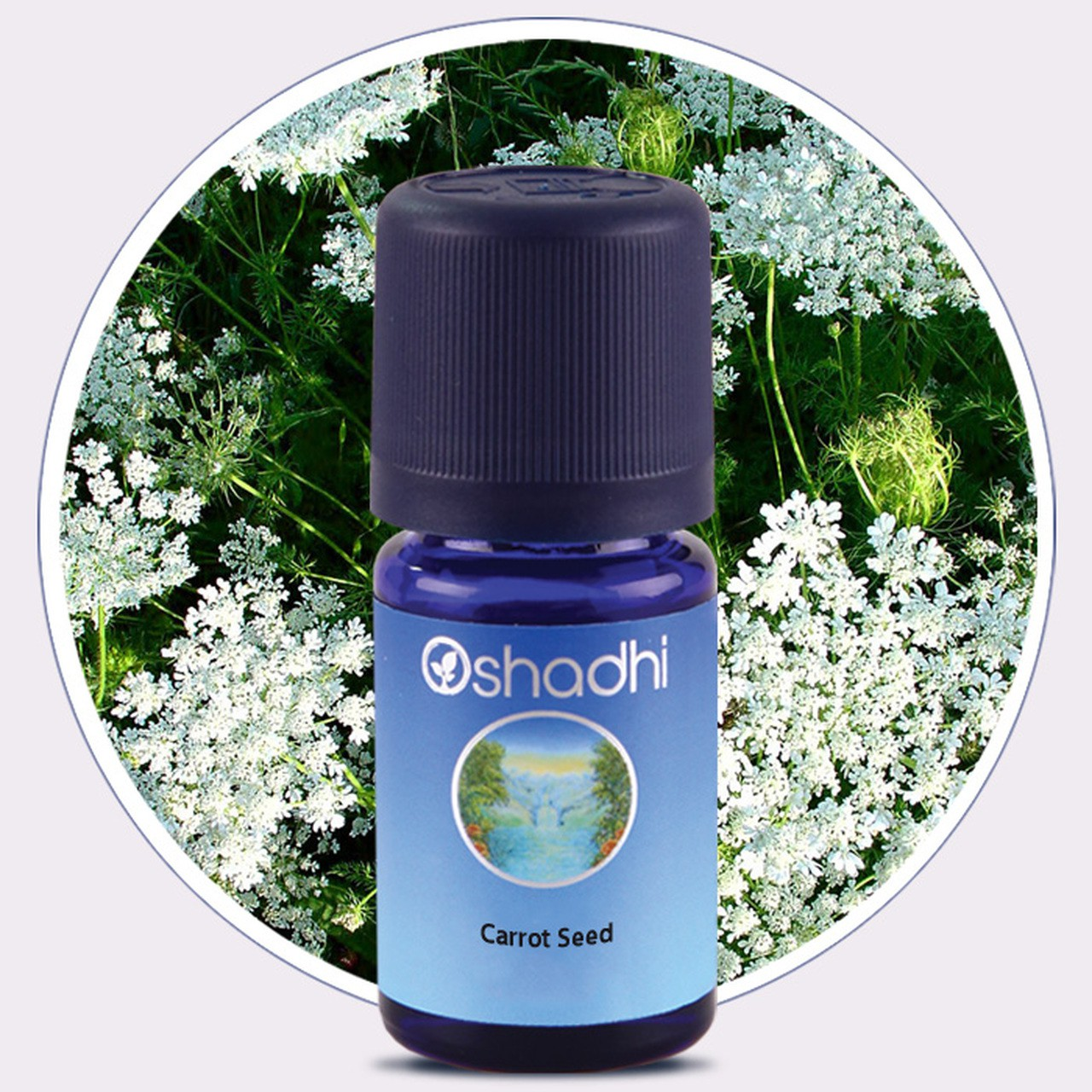 Carrot Seed (Oshadhi) 5ml