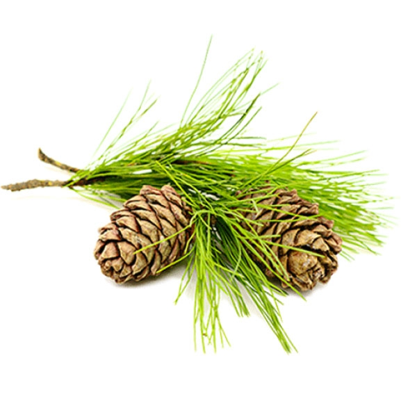 Cedar sprig and fern