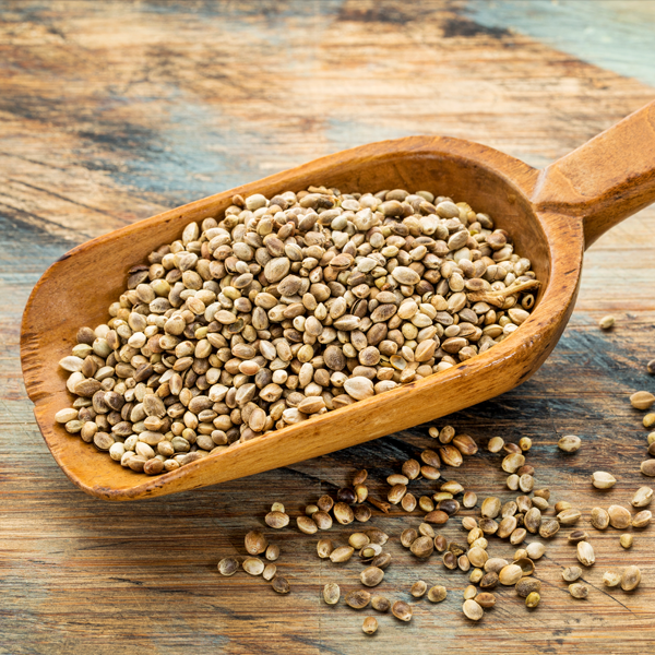 raw hemp seed illustration