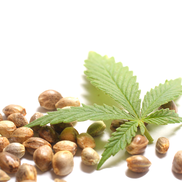 Hemp Seeds are a gift of nature