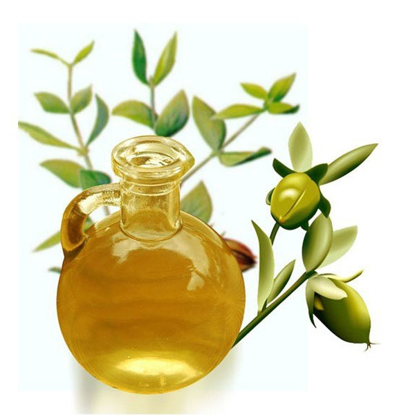 Jojoba oil illustration