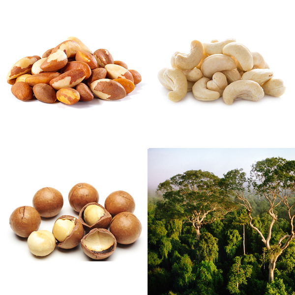 Rainforest Nuts Illustration