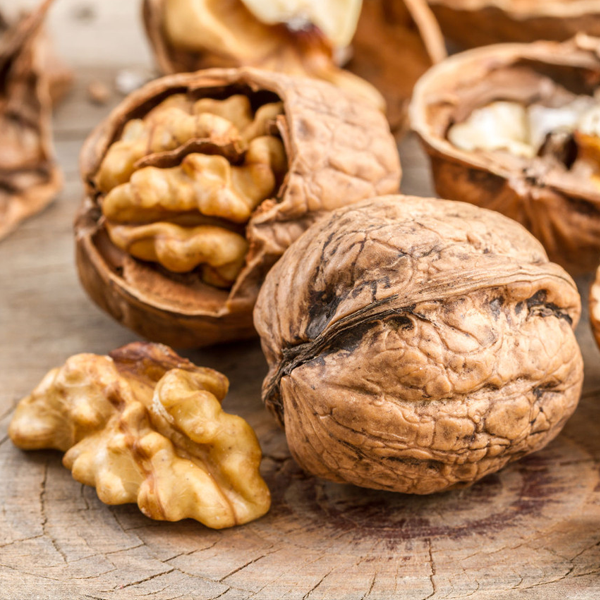 Walnuts are a rich source of energy